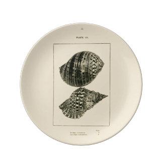NZ Shells - Dolium variegatum, Lotorium rubicundum Porcelain Plate