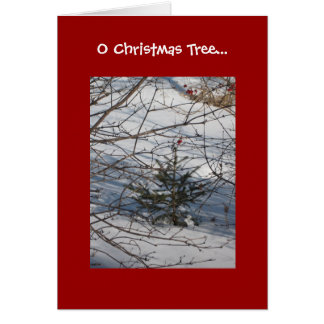 O Christmas Tree Greeting Cards