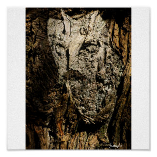 O del petirrojo las maderas póster
