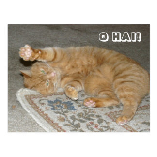 O HAI! POSTCARD