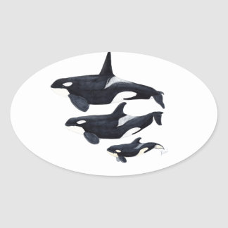 O.orca-fond transparent oval sticker