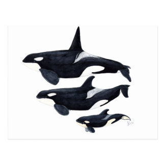 O.orca-fond transparent postcard