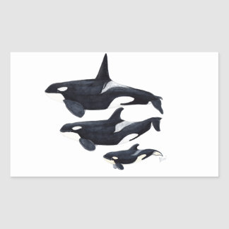 O.orca-fond transparent rectangular sticker