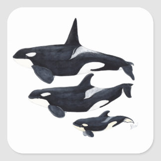 O.orca-fond transparent square sticker