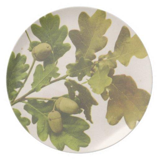Oak 1907 party plate