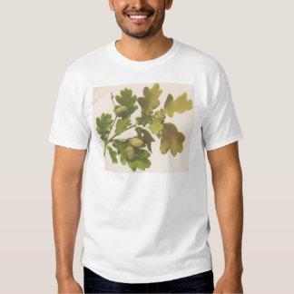 Oak 1907 shirt