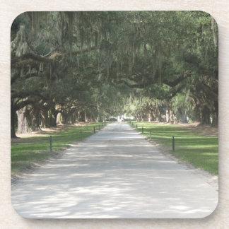 Oak Alley at Boone Hall, Charleston SC Coasters