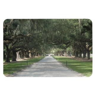 Oak Alley at Boone Hall, Charleston SC Magnet