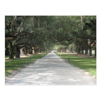 Oak Alley at Boone Hall, Charleston SC Postcard