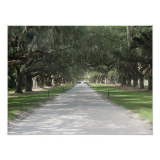 Oak Alley at Boone Hall, Charleston SC Poster