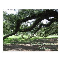 Oak Alley-Live oak tree branches, Oak Alley Pla... Postcard