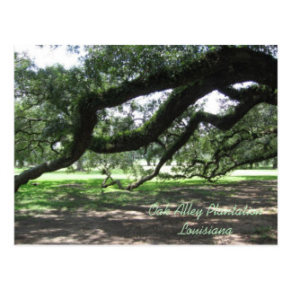 Oak Alley-Live oak tree branches, Oak Alley Pla... Postcard