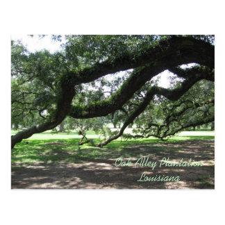 Oak Alley-Live oak tree branches, Oak Alley Pla... Postcards