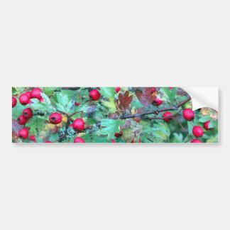 Oak and berries car bumper sticker