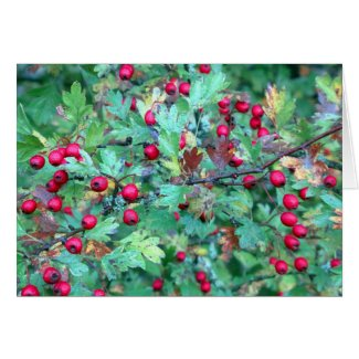 Oak and berries greeting card