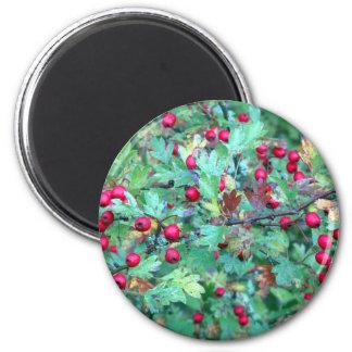 Oak and berries magnet