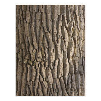 Oak Bark, Aschaffenburg, Franconia, Bavaria, Postcard