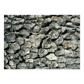 Oak bark, Indian Grinding Rock State Park, Califor Personalized Announcement