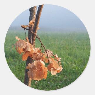 Oak bough round stickers