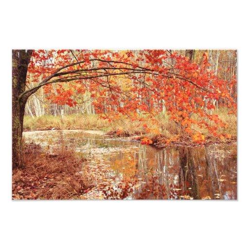 Oak branch in Autumn over a quiet stream Photo Print