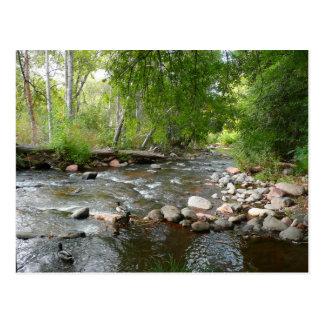 Oak Creek and Mallard Ducks Nature Photography Postcard