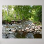 Oak Creek and Mallard Ducks Nature Photography Poster