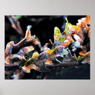 Oak Fairy Frosting print