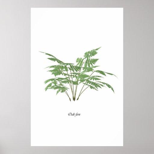 Oak Fern Poster