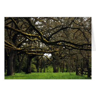 Oak Grove, 2 Card