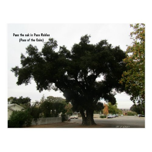 Oak in the Road in Paso Robles Postcard