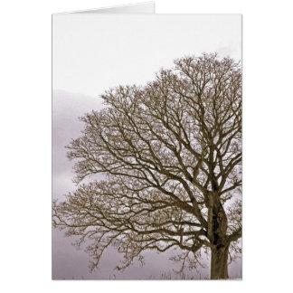 Oak in Winter 1 Card