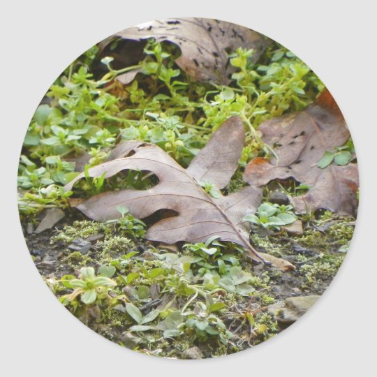 Oak Leaf and Chickweed Classic Round Sticker