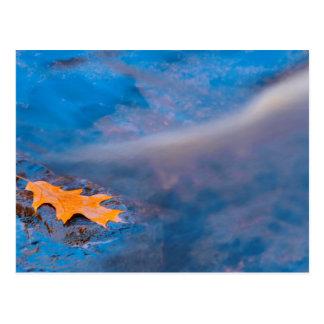 Oak leaf on rock in Rosseau River Postcard