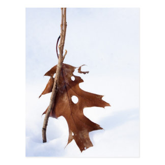 Oak Leaf Postcard