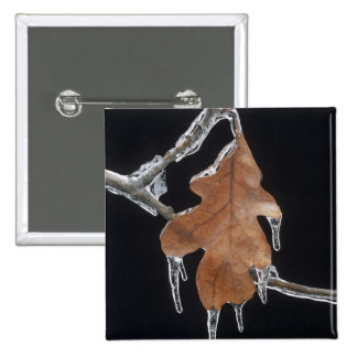 Oak Leaf with Ice Sickles After Ice Storm ; Pinback Button