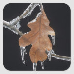 Oak Leaf with Ice Sickles After Ice Storm ; Square Sticker