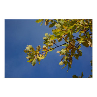 Oak Leaves Against a Blue Sky Poster