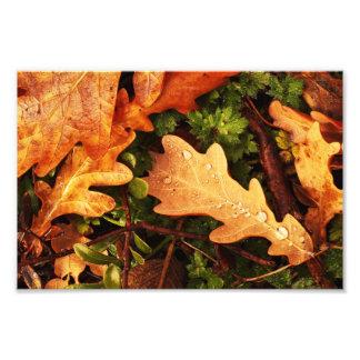 Oak Leaves. Photo Print