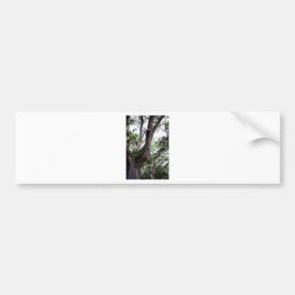 oak & mossGeorgia Live Oaks And Spanish Moss Bumper Sticker
