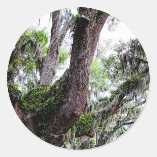 oak & mossGeorgia Live Oaks And Spanish Moss Classic Round Sticker