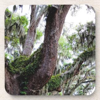 oak & mossGeorgia Live Oaks And Spanish Moss Coaster