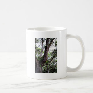 oak & mossGeorgia Live Oaks And Spanish Moss Coffee Mug