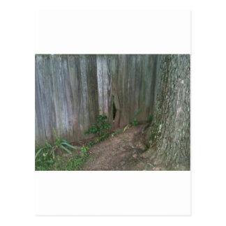 Oak Root vs. Fence Slat - Pick the winner! Postcard