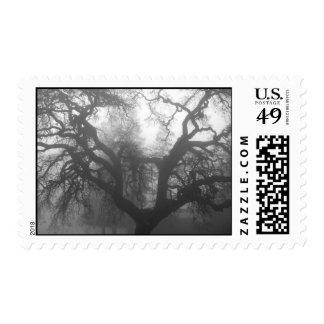 oak tree at sunrise, in fog postage