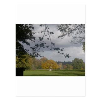 Oak Tree, Burley, New Forest Postcard