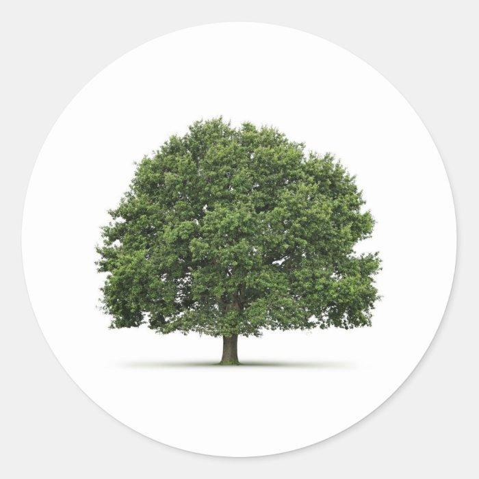 Oak Tree Classic Round Sticker