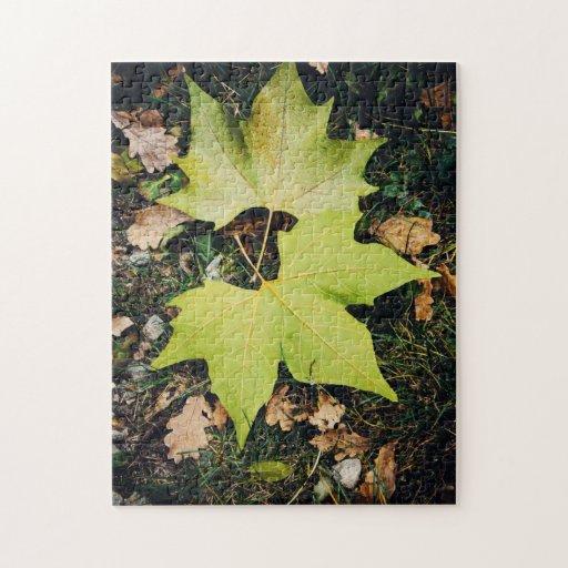 Oak tree green leaves jigsaw puzzles