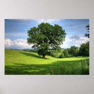 Oak tree green summer beautiful scenery poster