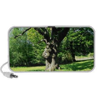 Oak Tree in a Green Field iPod Speaker