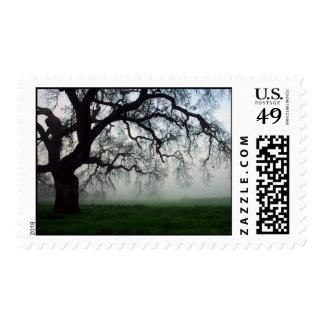 Oak tree in fog postage